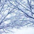 北海道札幌クリスマスおすすめホワイトイルミネーションス穴場ポット!